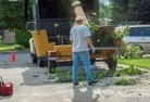 Adavale Tree cutting services 13