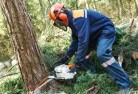 Adavale Tree cutting services 21